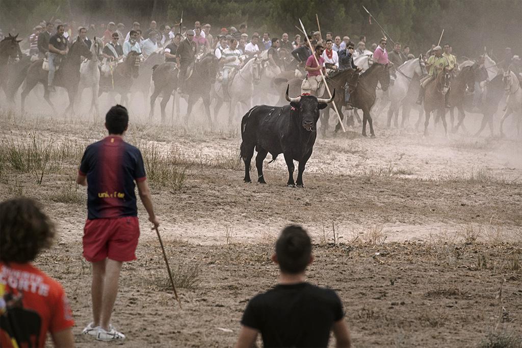 Toro de la Vega, Tordesillas (Kike Carbajal)